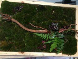 Estetik, Hiasan Dinding Buatan Mahasiswa UGM Ini Terbuat dari Lumut Hidup