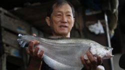 Ikan belida merupakan salah satu bahan baku yang digunakan pengusaha kuliner pempek di Palembang