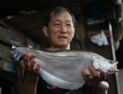 Asosiasi Kuliner Palembang Minta Pemerintah Longgarkan Larangan Penggunaan Ikan Belida