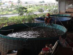 Perikanan Bioflok, Solusi Ketahanan Pangan di Lahan Sempit Jakarta