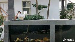 Pagar rumah dari kolam ikan koi