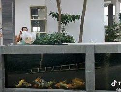 Rumah Ini Dipagari dengan Kolam Ikan Koi, Warganet: Semoga Aman