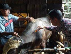 Kenali Jenis Penyakit Cacing Pada Ternak dan Cara Pencegahannya