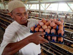Harga Telur di Berbagai Daerah Anjlok, Jawa Timur Terendah