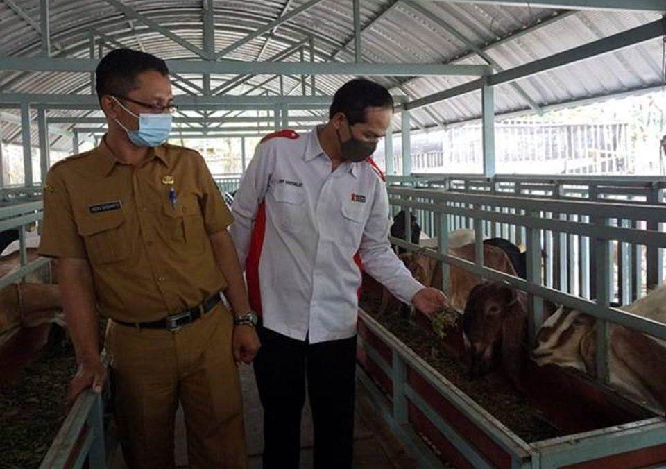 """Peternakan kambing """"Sumber Rejeki"""" Kota Kediri yang berhasil menciptakan inovasi ternak kambing tanpa bau dan rendah kolestrol. (Foto: tugujatim.id)"""