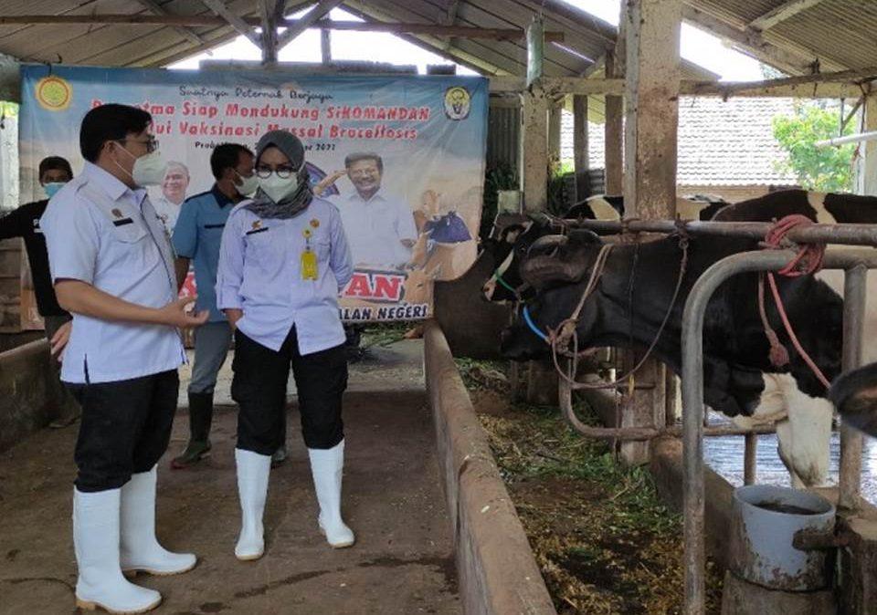 Pusvetma sebagai salah satu unit kerja di bawah Ditjen PKH melakukan penyerahan bantuan vaksin Brucivet (Foto: Kabarbisnis.com)