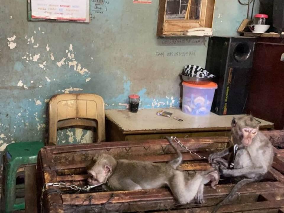 Monyet Ekor Panjang (Dok. JAAN)