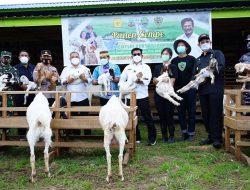 Kunjungi Kaltara, Mentan SYL Janji Kembangkan Pertanian Terintegrasi