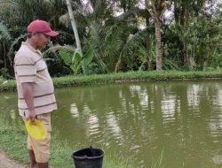 Begini Cara Warga Desa Gumiwang Banjarnegara Bisa Berhasil Budidaya Ikan Koi di Kolam Tanah