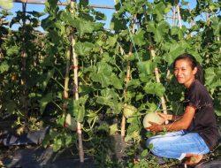 Pernah Dicibir Tetangga, Kini Maria Malah Jadi Petani Muda Sukses