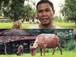 Hobi Beternak Sejak Kecil, Akri Patrio Kini Punya Bisnis Peternakan