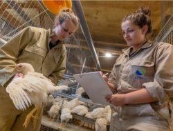Perusahaan Asal Belanda Investasi USD 50 Juta di Jatim untuk Bangun Industri Pakan Ternak
