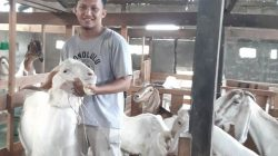 Fauzan Alfikri Kembali ke Kampung Halaman untuk Ternak Kambing. (Foto: kalbar.antaranews.com)
