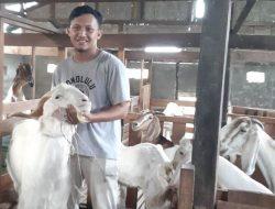 Kisah Sukses Fauzan Beternak Kambing Hingga Beromzet Ratusan Juta Rupiah