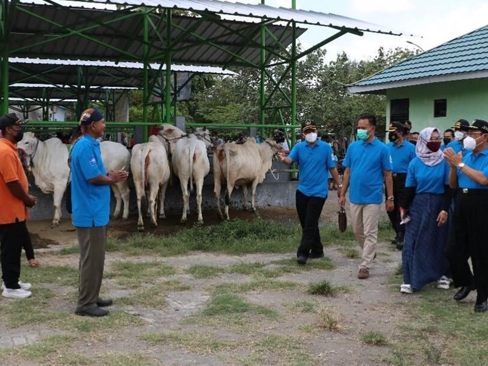 Kontes Ternak di Kabupaten Kulon Progo
