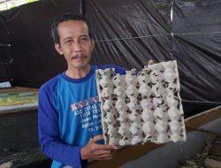 Guru Olahraga Sukses Budidaya Jangkrik Cliring, Bisa Panen 1 Kuintal Per Bulan