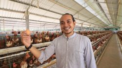 Putu Dicka Witrayana sukses beternak ayam petelur dengan omzet miliaran setiap bulannya.