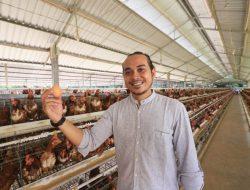 Peternak Milenial di Lombok Raup Untung Ratusan Juta Per Bulan dari Ayam Petelur
