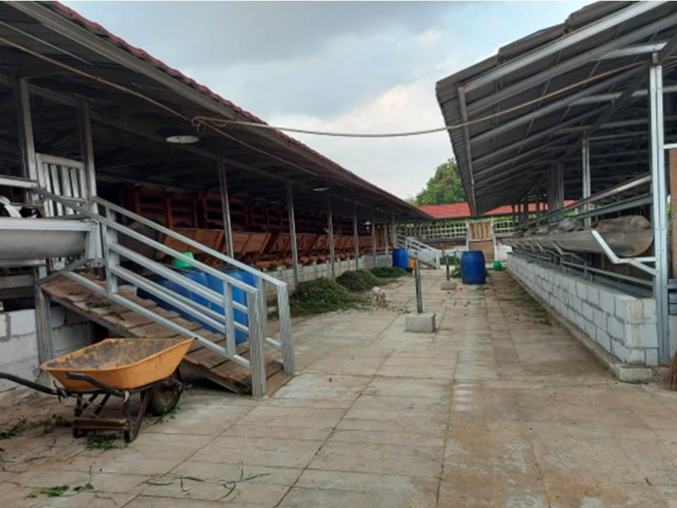 Kandang domba dan kambing milik H.Urip (Foto: Pertamina)