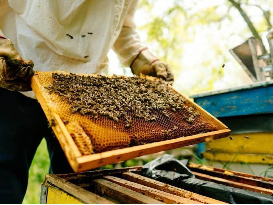 Peternakan lebah di Kroasia milik Domagoj Balja, Edukasi Warga dalam budidaya lebah dan proses produksi madu.
