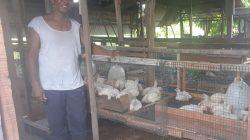 Muhammad Badra membuat kandang ayam yang dibawahnya diternakkan maggot BSF
