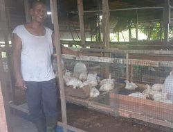 Maggot, Pakan Alternatif di Tengah Mahalnya Harga Pakan Ternak